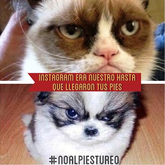 noalpiestureo_gatossi